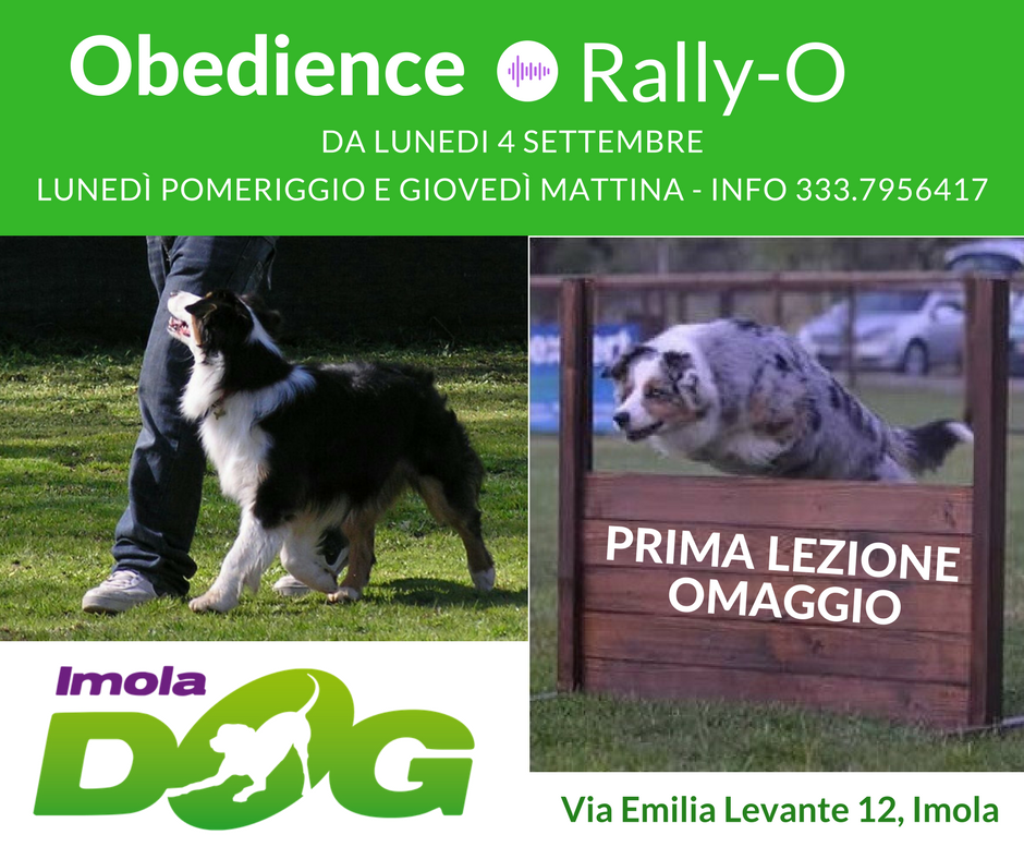 OBEDIENCE e RALLY-O!